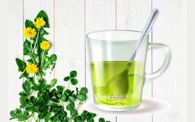 Ајурведски чај од глуварче за здрави бубрези