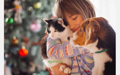 Колку сте запознати со поимот зоотерапија – терапија со миленичиња?