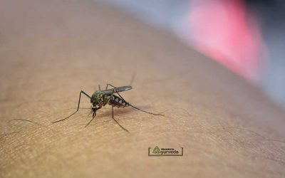 Како да се одбраниме од комарците на природен начин!